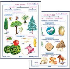 Reino vegetal / reino hongos