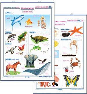 Reino animal vertebrados/invertebrados