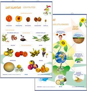 Los frutos / utilidades plantas