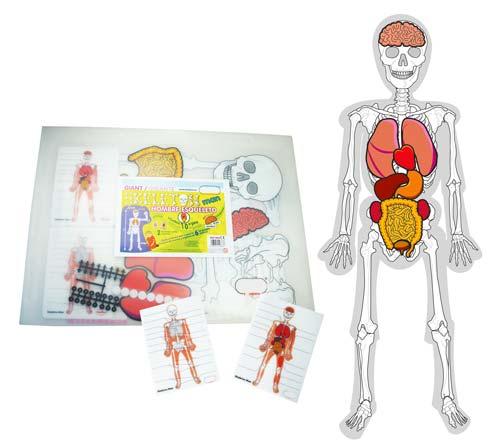 El hombre esqueleto detalle 5