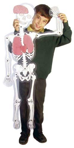 El hombre esqueleto