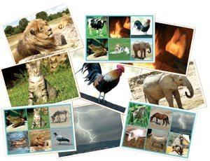 Bingo Los animales y la naturaleza