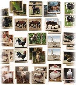 Memoria animales granja