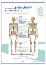 Lámina El cuerpo / El esqueleto, revés