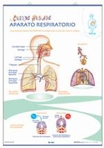Láimina Aparato circulatorio / Respiratorio, revés