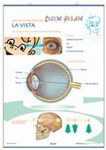 Lámina La vista - El oído, revés