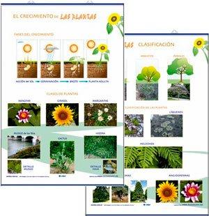 Las plantas, crecimiento / clasificación