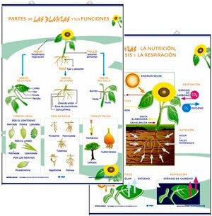 Las plantas, partes / fotosíntesis