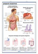 Lámina Aparato digestivo / Excretor