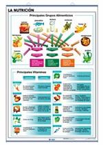 Lámina Nutrición - El cuerpo humano