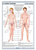 Lámina Nutrición - El cuerpo humano, revés