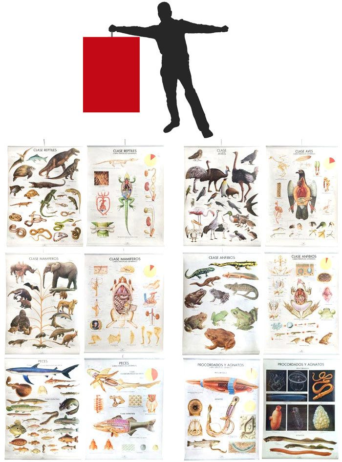 Láminas gigantes animales vertebrados 12 ud