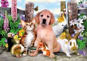 Puzzle cachorros