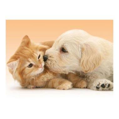 Puzzle Perro y gato