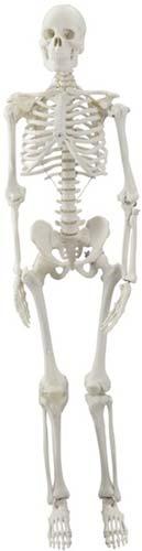 Mini-esqueleto 85 cm