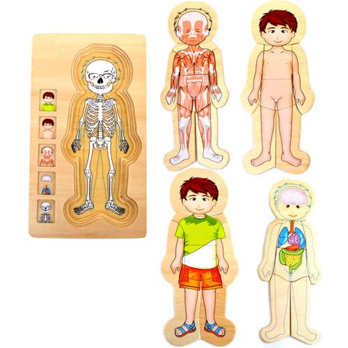 Anatomía puzzles por capas Niño 28 piezas